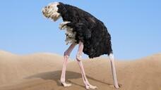 Kopf in den Sand: So mancher Apotheker und manche Apothekerin hat offenbar resigniert, was die Standespolitik angeht. (x / Foto:Andrey Kuzmin/AdobeStock)