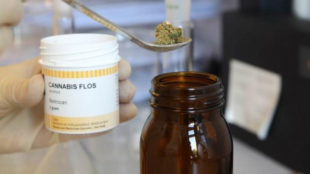 Medizinalcannabis wird in Großbritannien derzeit nicht vom NHS erstattet. Eine groß angelegte Datensammlung soll die Evidenz liefern, damit sich das ändert. (c / Foto: imago images / epd)