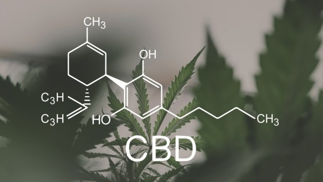 CBD ist ein Hauptcannabinoid vieler Cannabissorten. Es ist im Gegensatz zu THC nicht psychoaktiv und fällt auch nicht unter das Betäubungsmittelgesetz. (Foto: cendeced/stock.adobe.com)