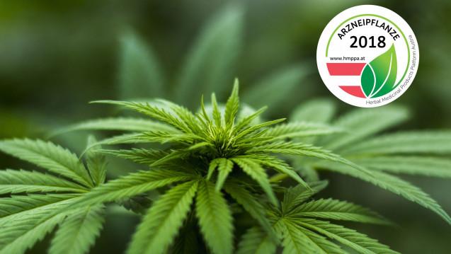 In Österreich hat das Wissenschaftsnetzwerk HMPPA Cannabis sativa zur Arzneipflanze des Jahres gewählt. (Bild: HMPPA)