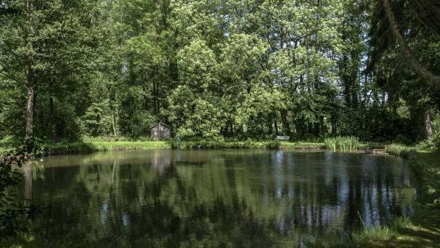 Still ruht der See – wie Gewässer von Arzneimittelrückständen entlastet werden können, dazu hat die Regierung noch wenig konkrete Ideen. (c / Foto: imago)