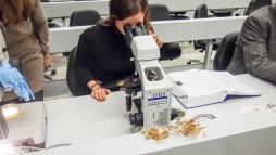 """""""Wir wollten nicht nur Mikroskopie machen, sondern auch Gentechnik"""", sagt Professor Fürstvom Institut Pharmazeutische Biologie. (Foto: Schneider / DAZ.online)"""