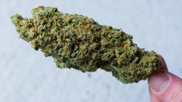 Knapp 80.000 Bürgerinnen und Bürger haben eine Petition zur Abschaffung des Cannabis-Verbotes unterzeichnet. Die Petition wurde kürzlich im Bundestag diskutiert. (Foto: remo/adobe.stock.com)