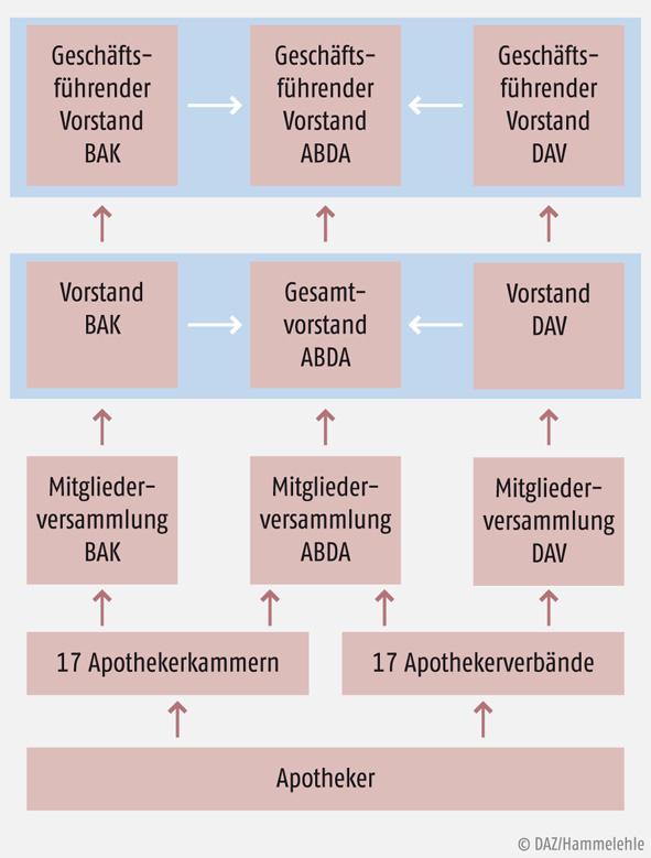 Grafik: So werden die Vorstände der Organisationen gewählt.