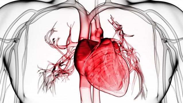 Wie beeinflusst die Corona-Pandemie das Herz-Kreislauf-System? Es gibt noch viel Forschungsbedarf. (c / Symbolbild: SciePro / AdobeStock)