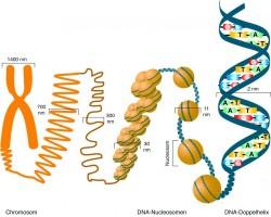 D0111_du_Epigenetik_01.jpg
