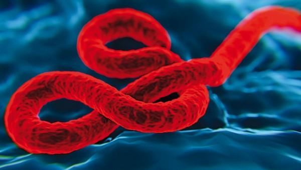 Virus kann sich monatelang in Samenflüssigkeit halten