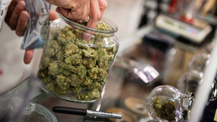 Bundestag debattiert über Cannabis-Verbot