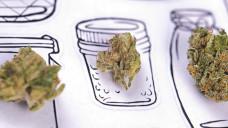 Kaum erlaubt, schon vergriffen: Medizinisches Cannabis aus Apotheken ist derzeit fast überall in Deutschland vergriffen. (Foto: rgbspace / stock.adobe.com)