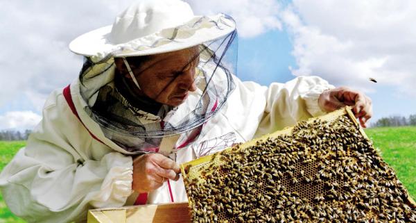 Varroose der Bienen