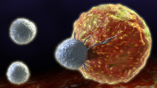 Die modifizierten T-Zellen sollen insbesondere bei nicht-soliden Tumoren erfolgsversprechend sein. (Foto:Andrea Danti / Fotolia)