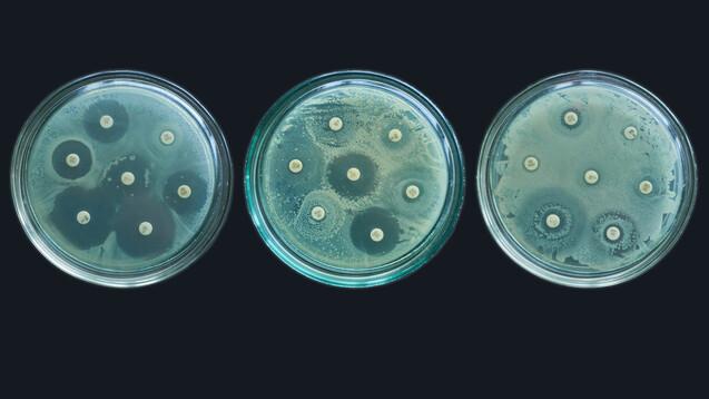 Noch vor der Einführung in Deutschland zeigten die Ergebnisse einer Studie der Justus-Liebig-Universität (JLU) und des Deutschen Zentrums für Infektionsforschung (DZIF), dass Bakterien bereits nicht mehr auf die Kombination ansprachen. (x / Foto: Nicolae / AdobeStock)