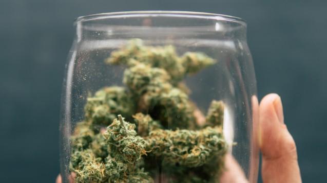 Das Oberlandesgericht Hamburg stuft Cannabisblüten in Kunststoffdosen als Ausgangsstoff und nicht als Arzneimittel ein. (Foto: imago images / agefotostock)