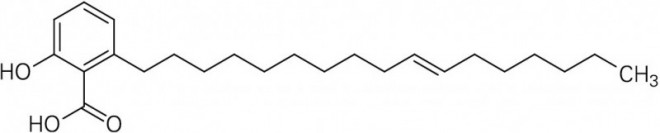 Ginkgolsaeure-C17-1.EPS