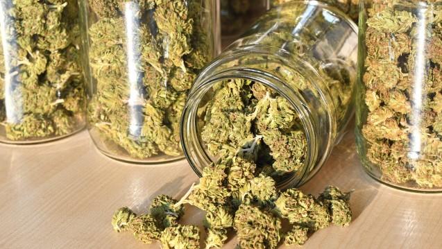 Aphria will mittelfristig auch in Deutschland Cannabis anbauen. (c / Foto: Soru Epotok / stock.adobe.com)