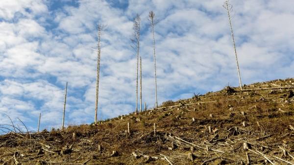 Zusammenhang zwischen Abholzung und Infektionskrankheiten