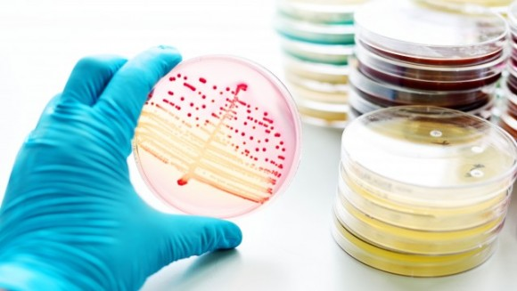 Karies Bakterien Abtöten