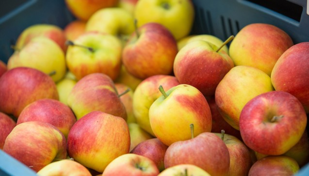 Auf der INTERPHARM ist nicht nur für geistige Nahrung gesorgt. Für den kleinen Hunger zwischendurch gab es Äpfel für die Besucher.