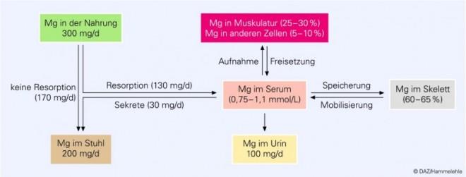 magnesium darm beschwerden