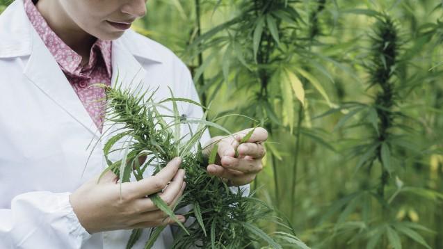 Bald auch für nicht-medizinische Zwecke erlaubt? Die Stadt Düsseldorf will zukünftig einen legalen Cannabis-Konsum ermöglichen. (Foto: stokkete / Fotolia)