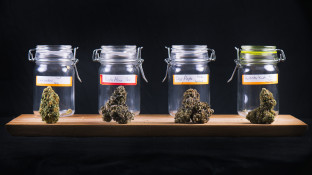 Nur ein Drittel ist für Cannabis-Verkauf in Fachgeschäften
