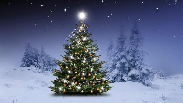 Der Baum, um den sich jetzt alles dreht...