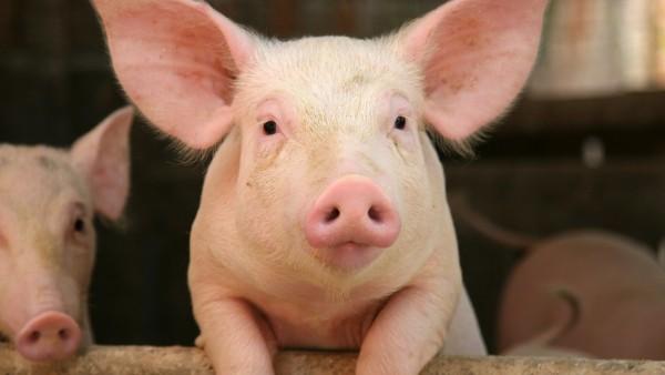 Rx-Versandverbot für Tierarzneimittel – Wem soll man das erklären?