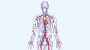 Körperkonzentrationen – Wichtige Grundlagen der Pharmakokinetik