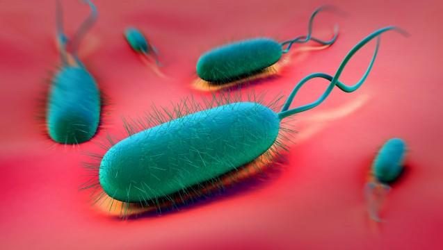 Helicobacter erhöht das Risiko an Magenkrebs zu erkranken, auch wenn er keine Beschwerden macht. (Foto: royaltystockphoto / Fotolia)