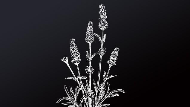 Lavendelblüten, Lavandulae flos