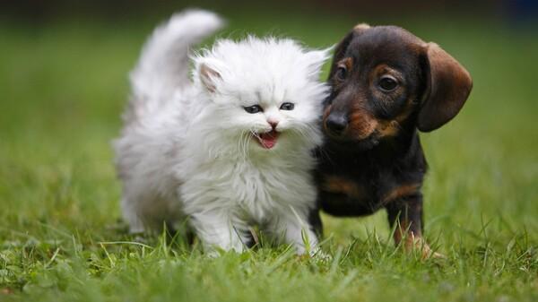 Tierarzneimittelgesetz und Delegierter Rechtsakt verabschiedet