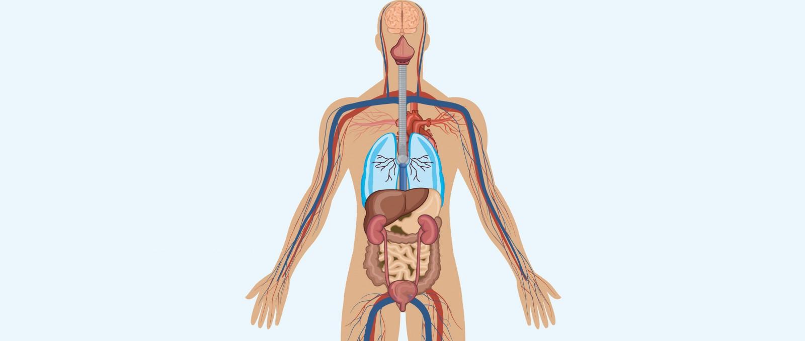 Image result for Weg durch den Körper!