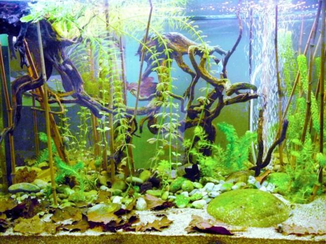 D1709_feu_aquarium.jpg