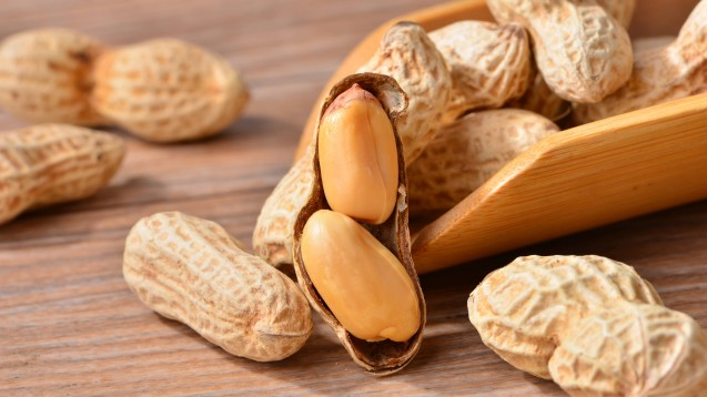 Plaforzia enthält Erdnussprotein und ist das erste Arzneimittel zu Behandlung von Erdnussallergie bei Kindern und Jugendlichen. Dennoch müssen sich die Allergiker weiterhin erdnussfrei ernähren. (Foto: imago images / Imaginechina-Tuchong)