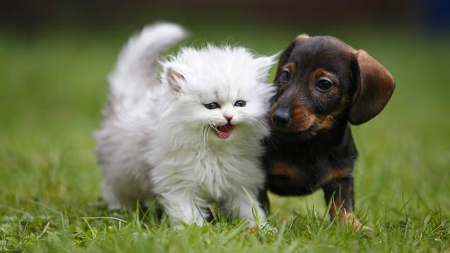 Mithilfe einer emotionalen Kampagne verhinderte der Bundesverband der Praktizierenden Tierärzte, dass der Einsatz von Antibiotika auch bei Haustieren noch stärker eingeschränkt wird als jetzt im neuen TierAMG vorgesehen. (s / Foto: IMAGO / blickwinkel)