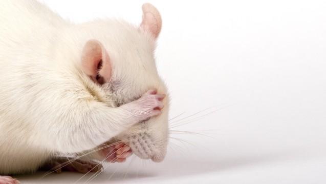 Wenn es nach dem FDA-Chef geht, sollen Daten von Tierversuchen öffentlich werden. (Foto: helga lei / Fotolia)