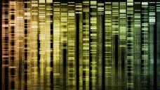 Was wüssten Sie gerne, wenn ihr Genom aufgeschlüsselt würde? (Bild: kentoh/Fotolia)