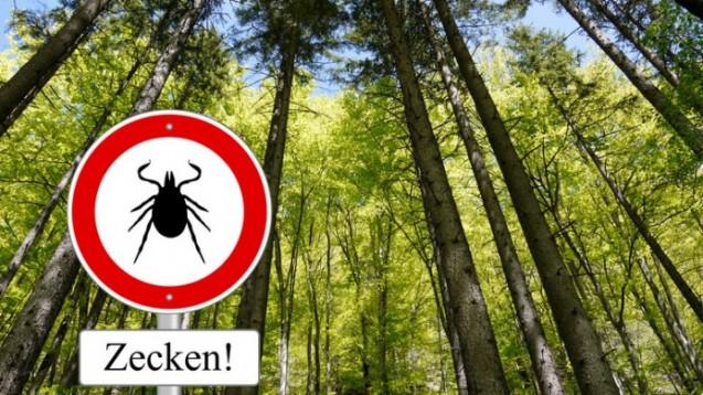 Lauern auch - aber nicht nur - im Wald: Zecken. (Schlegelfotos- Fotolia.com)