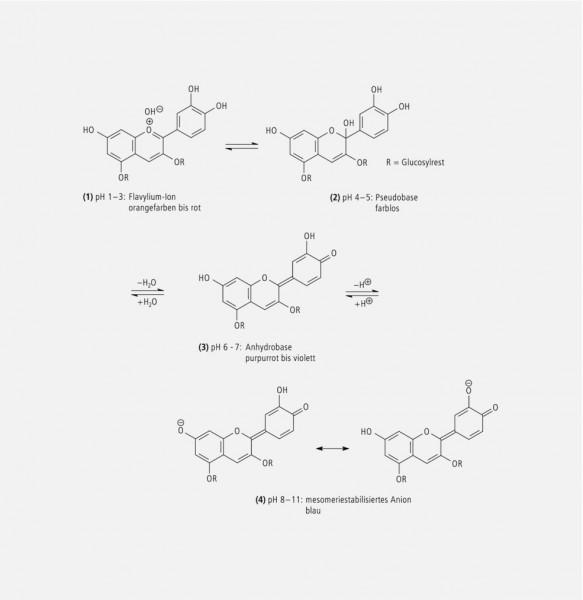 beta cyanin and beta vulgaris Stabilized conversion efficiency and dye-sensitized solar cells from beta vulgaris pigment  derived from cyanin in blackberries,.