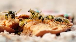 Spezifische Immuntherapie bei Insektengiftallergie