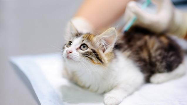 Tierärzte müssen erstmals für 2025 die für Hunde und Katzen angewendeten Antibiotika nach Art und Menge erfassen. (Foto: Maria Sbytova / AdobeStock)