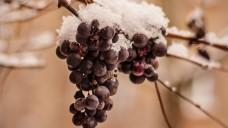 Die Obst- und Gemüsebauern besprühen, wenn Nachfrost droht, ihre Pflanzen mit einem feinen Wassernebel – warum eigentlich? (Foto: McNic / stock.adobe.com)
