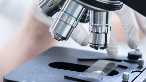 Zehntausende Fachartikel basieren auf kontaminierten Zelllinien