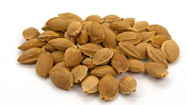 Aprikosenkerne werden teils als Heilmittel beworben, obwohl die Einnahme riskant sein kann. (Foto:M. Schuppich / Fotolia)