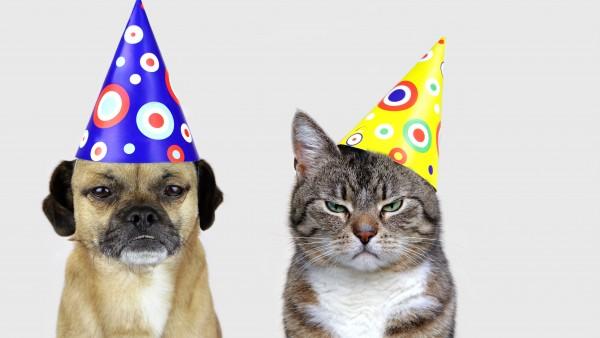 Silvester mit Hund und Katze