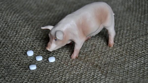 Neue Regeln für Reserve-Antibiotika in der Tierhaltung