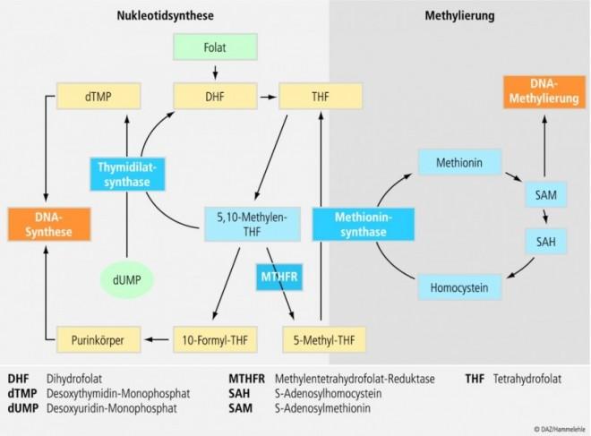 10_ral_nutrigenetik_05.eps