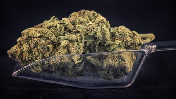 Mehr Cannabis-Rezepte als erwartet