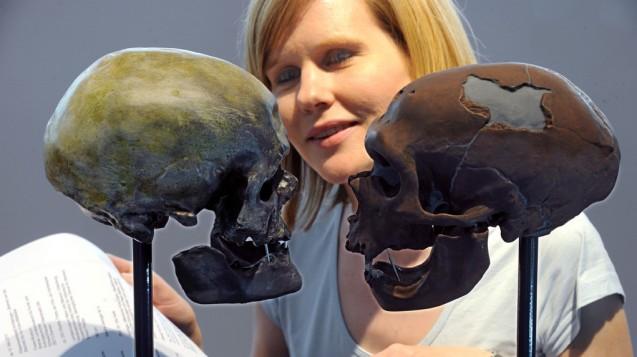 Erbe mit Folgen: Der Schädel eines neuzeitlichen Menschen (l) und eines Neandertalers im Vergleich . (Foto: Ingo Wagner dpa)