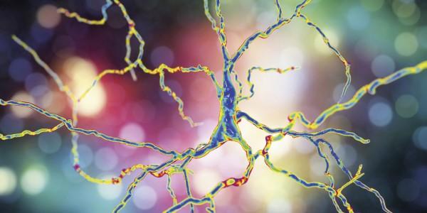Mit PARP-Inhibitoren gegen Parkinson